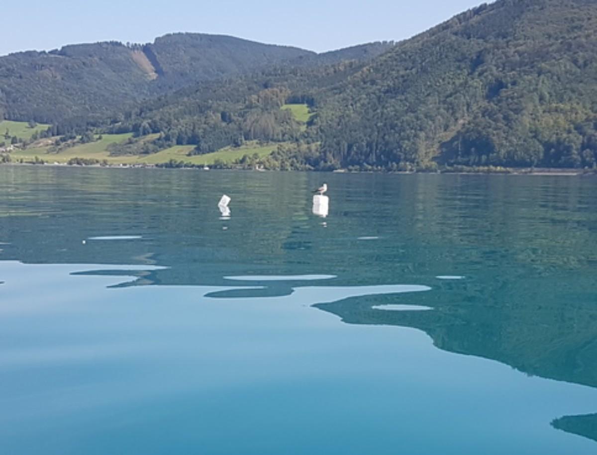 Meeting a gull on latitude Steinbach